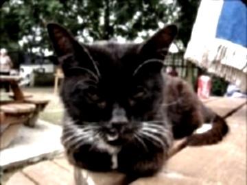 Кошка-ясновидец (360x270, 34Kb)