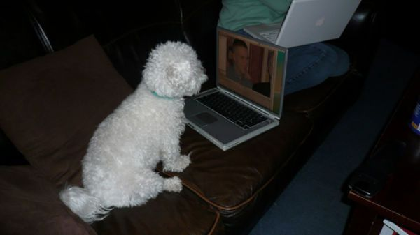 Dog_comp_4 (600x337, 22Kb)