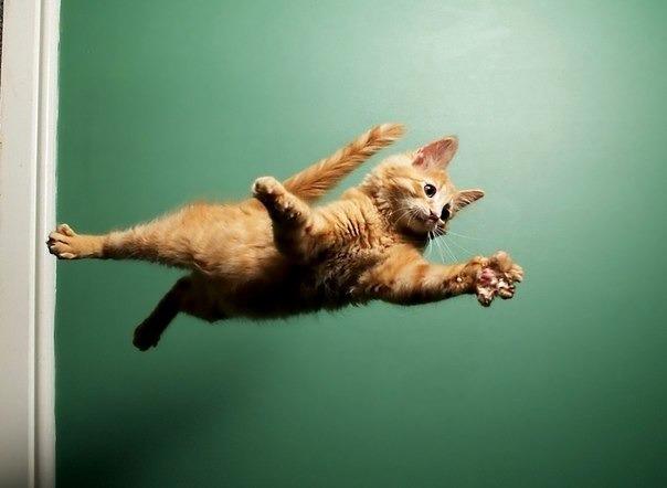 Падающая кошка (604x442, 32Kb)