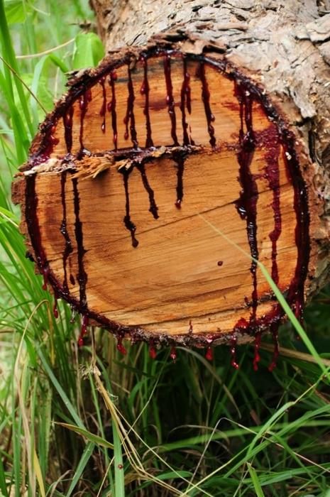 кровавое дерево фото 6 (465x700, 296Kb)
