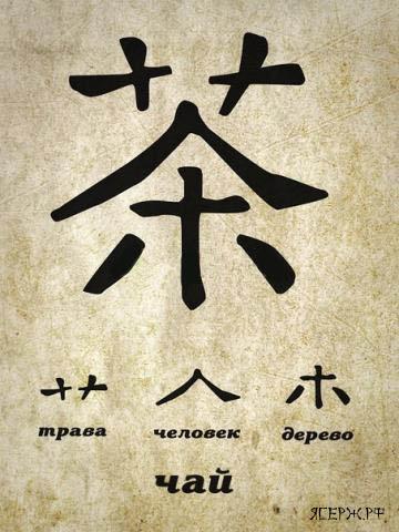 3821971_kitaiskii_chai_cha (360x480, 67Kb)