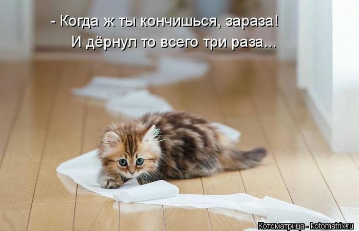 kotomatritsa_Ac (700x451, 157Kb)