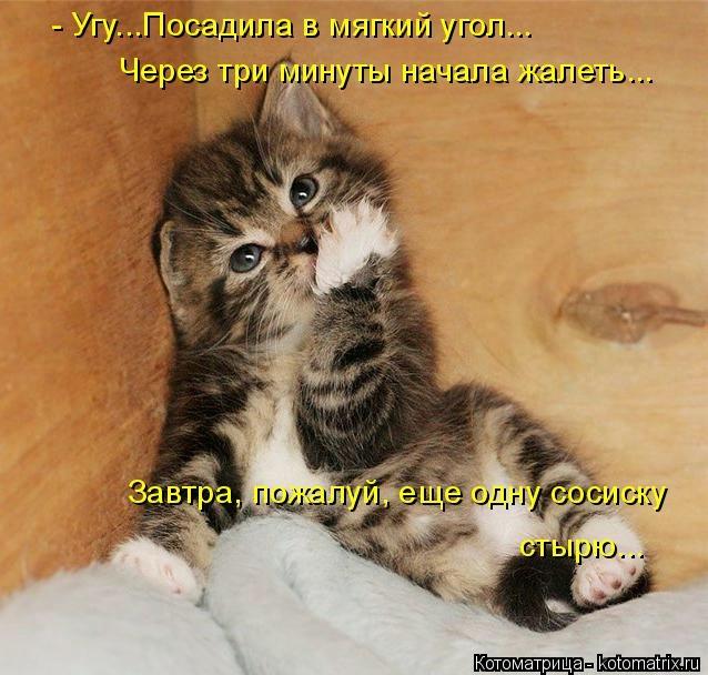 kotomatritsa_m (638x608, 173Kb)