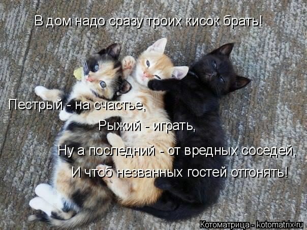 kotomatritsa_Ty (604x453, 171Kb)