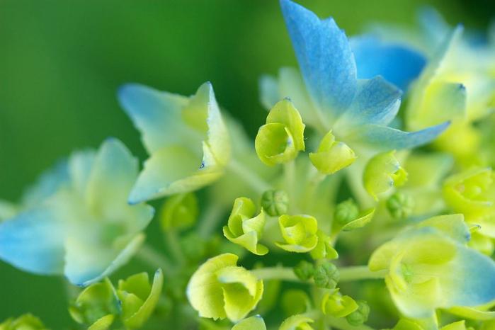Flowers_7 (700x466, 258Kb)