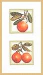 Превью ФС-001 Апельсины (280x483, 44Kb)