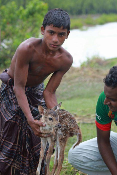 Baby-deer-in-Bangladesh-pixanews-4 (466x700, 49Kb)