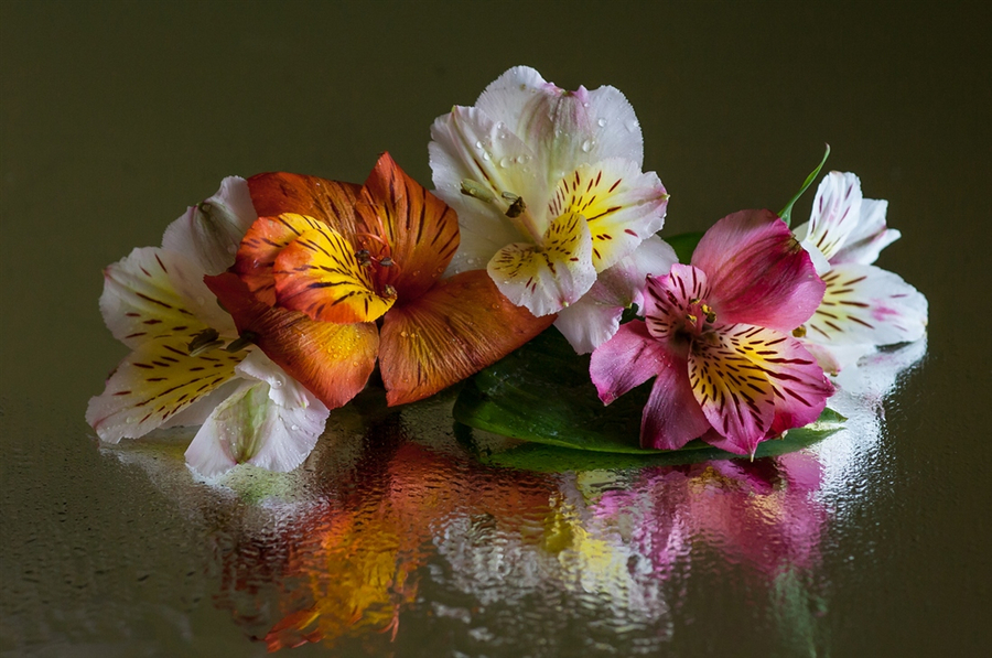 Стихи про полевые цветы и женщину