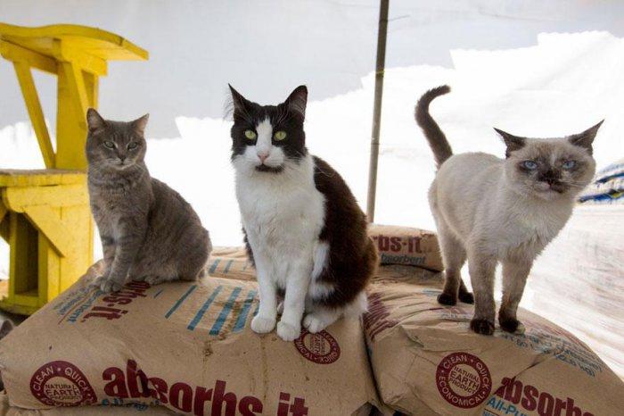 кошачий приют 1 (700x466, 212Kb)