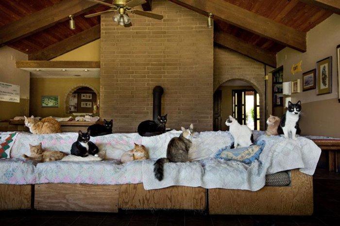 кошачий приют 16 (700x466, 258Kb)