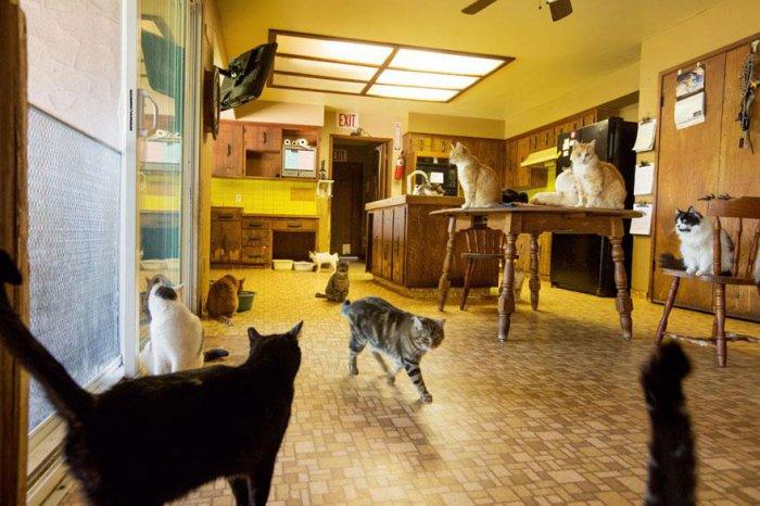 кошачий приют 18 (700x466, 297Kb)