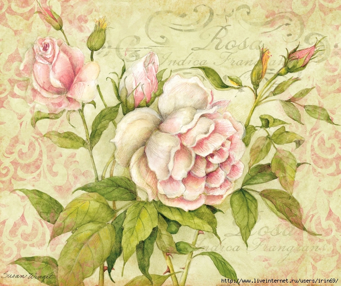 rose-boxed-notecard-1005301 (700x588, 391Kb)