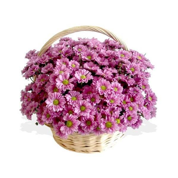 корзина с хризантемами фото