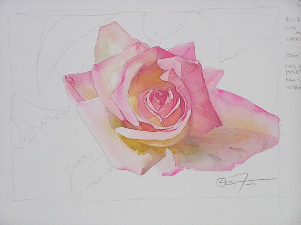 roses-operarosestudy[1] (600x450, 220Kb)
