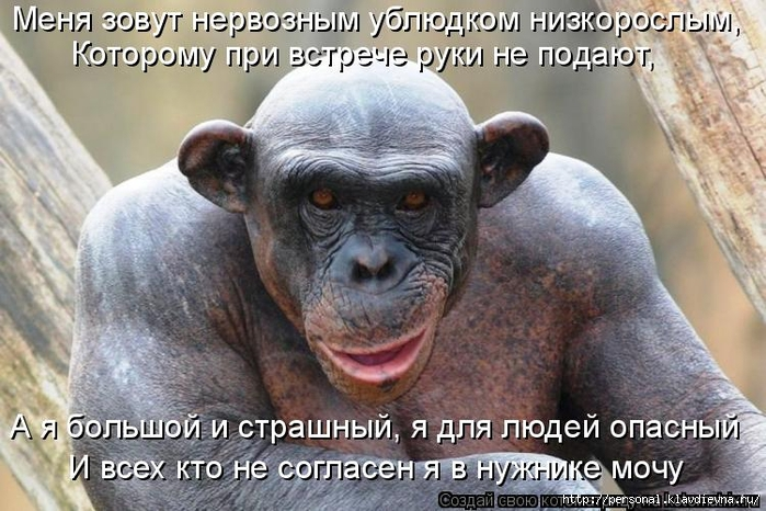 kotomatritsa_rK (700x466, 286Kb)
