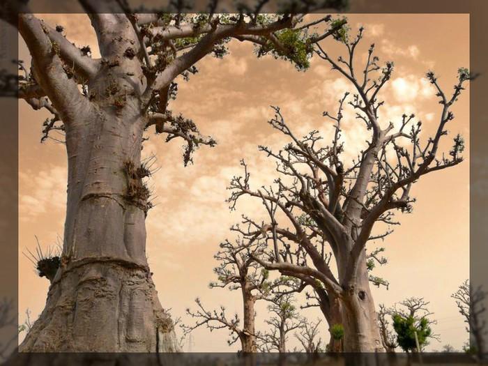 1230085925_042_drzewa_42 (700x525, 117Kb)