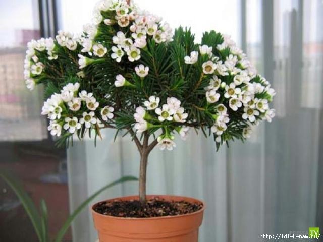 как подкармливать комнатные растения, чем подкармливать домашние цветы, как самим сделать удобрения для цветов,