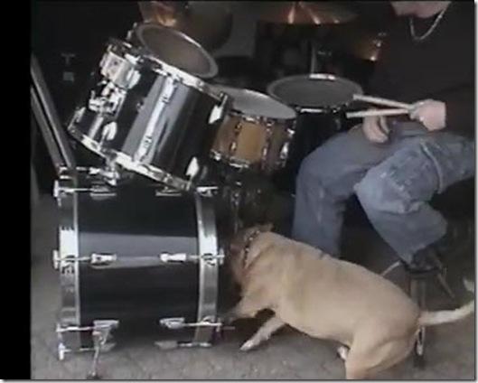 3821971_drummerdogrocks_thumb255B1255D (529x424, 47Kb)