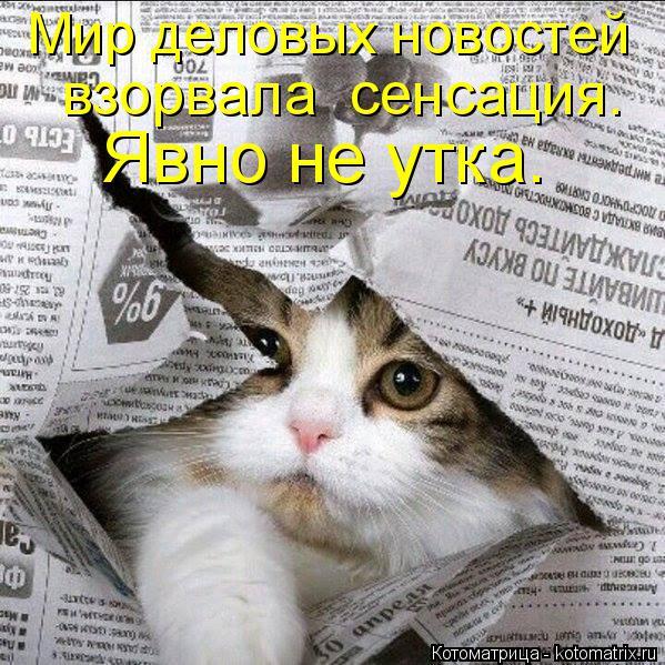 kotomatritsa_SZ (599x599, 392Kb)