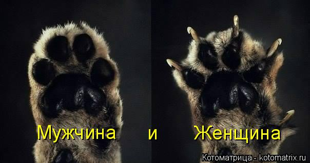 kotomatritsa_2v (604x318, 120Kb)
