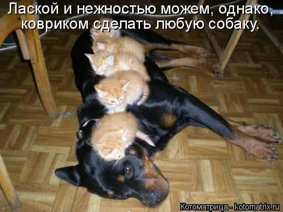 kotomatritsa_c (580x435, 212Kb)