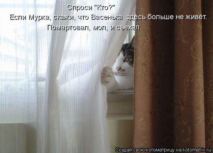 kotomatritsa_eX (700x503, 218Kb)
