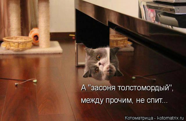 kotomatritsa_No (640x418, 178Kb)