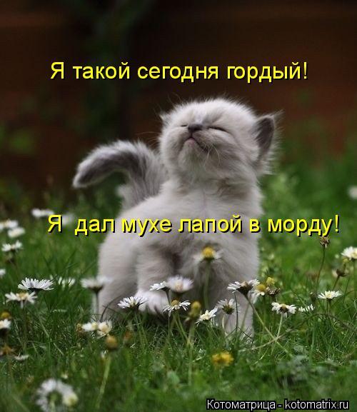 kotomatritsa_V (500x577, 226Kb)