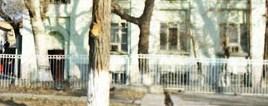 родигрушка (268x106, 44Kb)