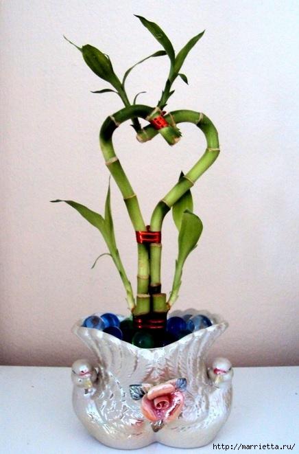 Комнатный бамбук. Красивые идеи и уход за бамбуком в воде (6) (436x661, 165Kb)