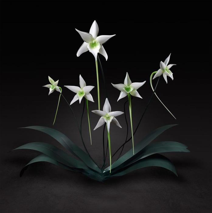 стеклянные цветы 19 (697x700, 172Kb)