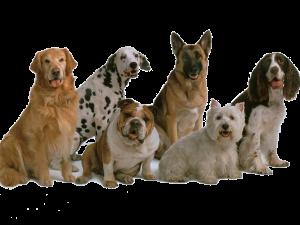 Самые добрые собаки: топ 10 пород.