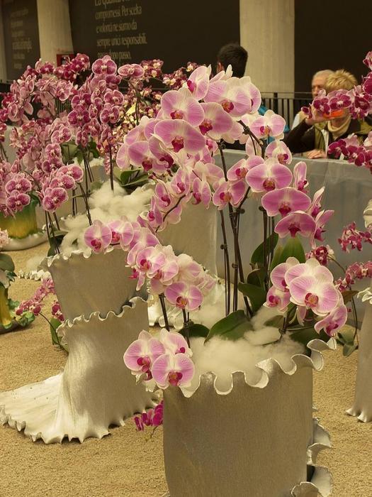 ������� ����������/4565316_orchidphalaenopsisarrangement (525x700, 310Kb)