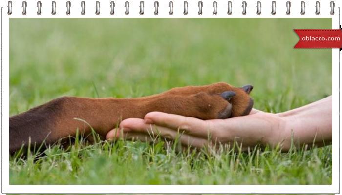 Пёс-счастливчик