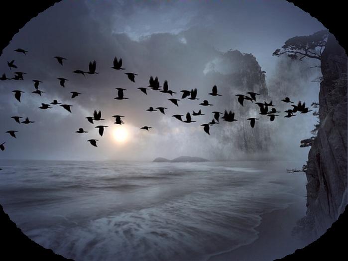 flock-of-birds-392676_640 (700x524, 432Kb)