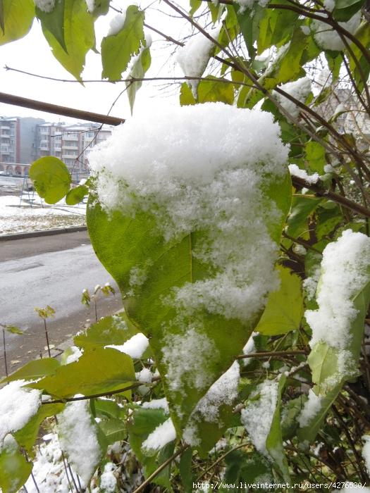 с первым снегом Ангарск!  (525x700, 351Kb)