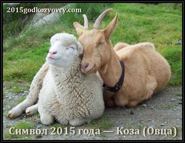 1413259802_simvol2015godakozaovca (620x480, 90Kb)