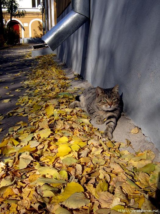 осенний кот (1) (525x700, 391Kb)