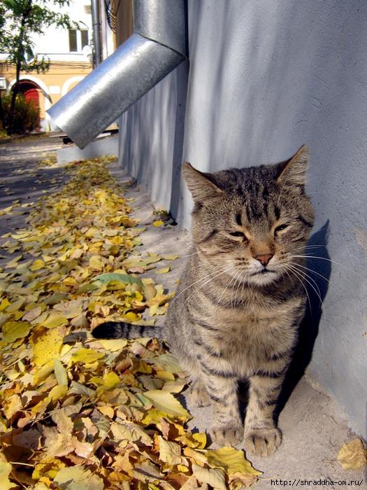 осенний кот (3) (525x700, 367Kb)