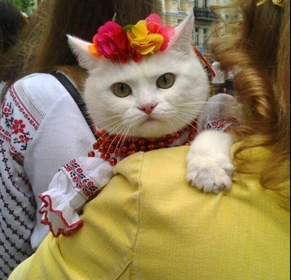 Кошечка україночка (599x577, 57Kb)