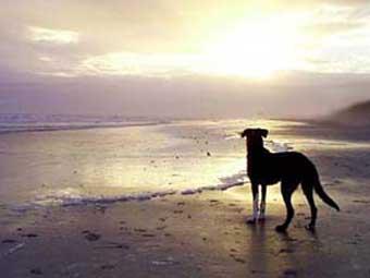 Выпавшая за борт собака смогла спастись на необитаемом острове