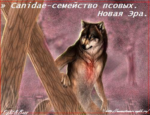 http://img1.liveinternet.ru/images/attach/c/0//42/464/42464446_1239609069_591096914.jpg