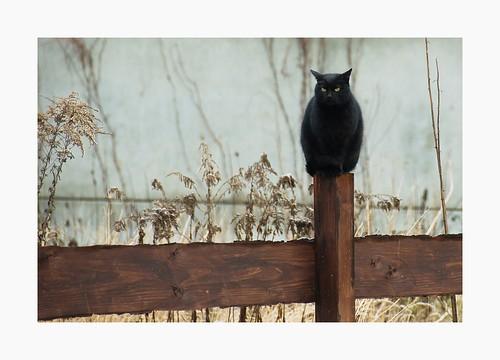 http://img1.liveinternet.ru/images/attach/c/0//42/790/42790819_kittenscatsniceowlcatanimalskotuycat88ef1ac3269b4028512ef3039b7db3d6_h.jpg