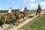 Конные прогулки на День Победы 991-57-25, 8-916-680-91-20