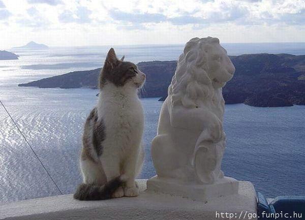 Кот, лев, море, статуя