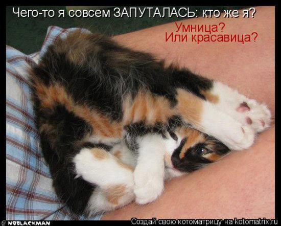 Смешное фото с кошками или...
