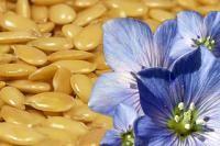 Цветок льна и льняное семя
