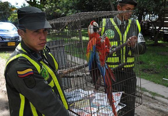 Дикие животные в Баготе