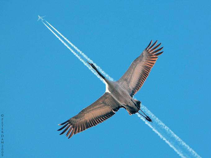 птица самолет