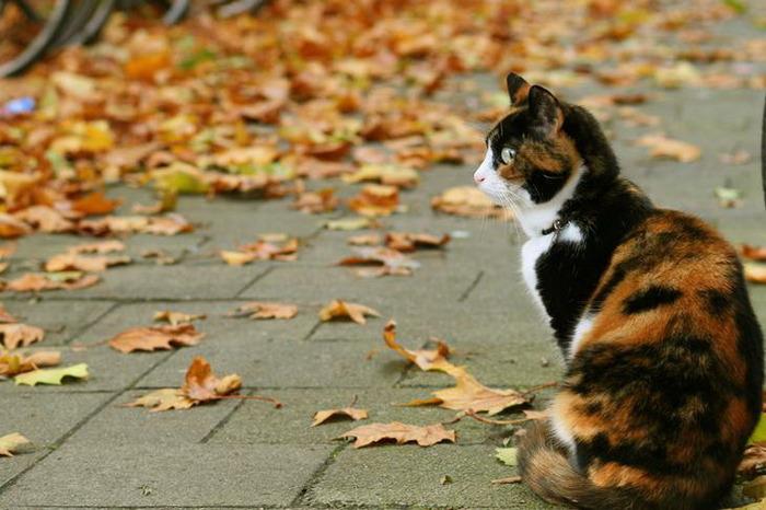 Рыжая кошка - муза поэтов